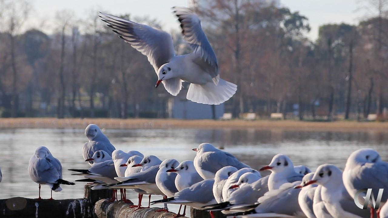 鳥が着地点を探している様子