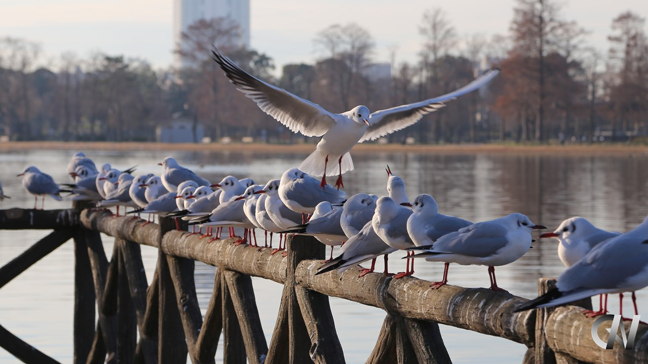 鳥が着地点で悪戦苦闘する様子