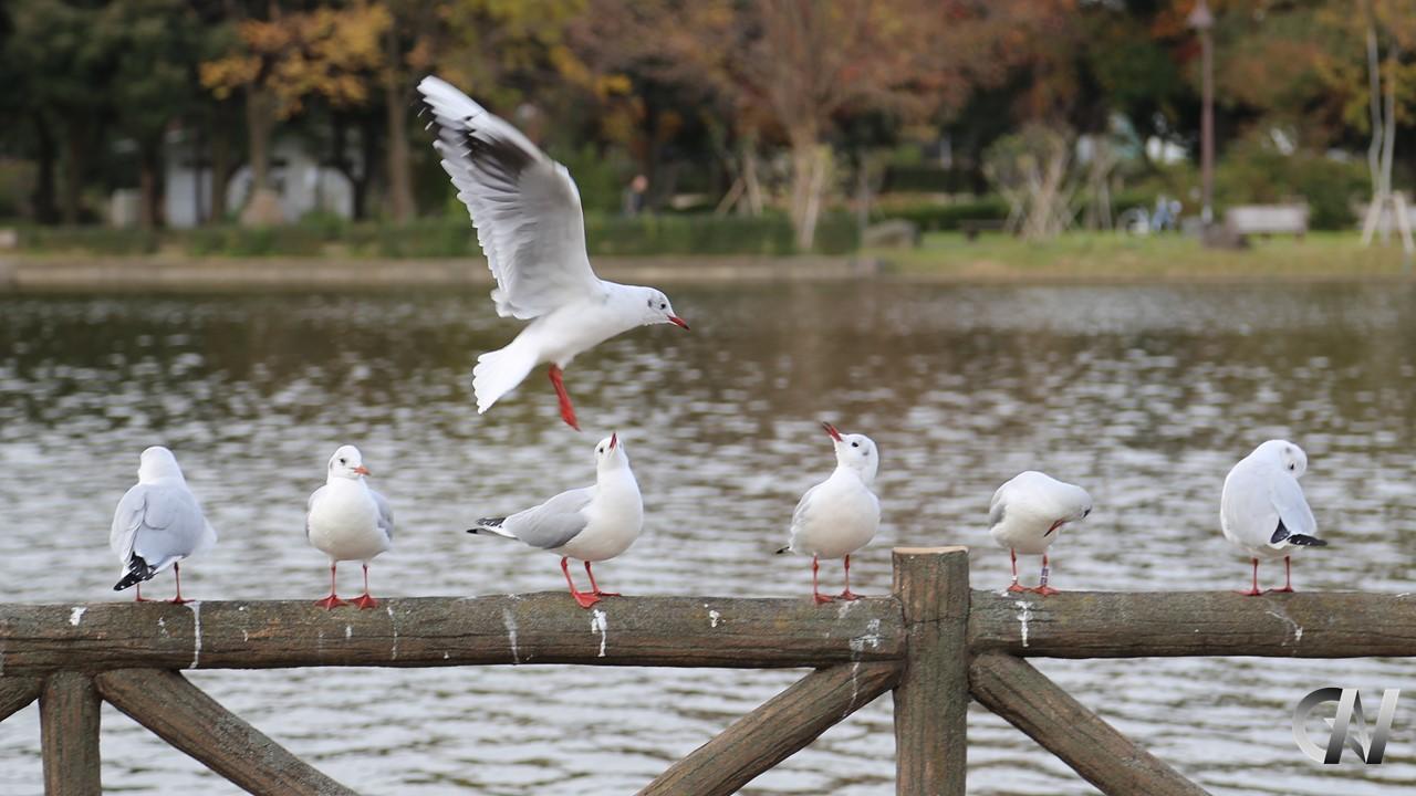 鳥がどこに着地すべきか考えている様子