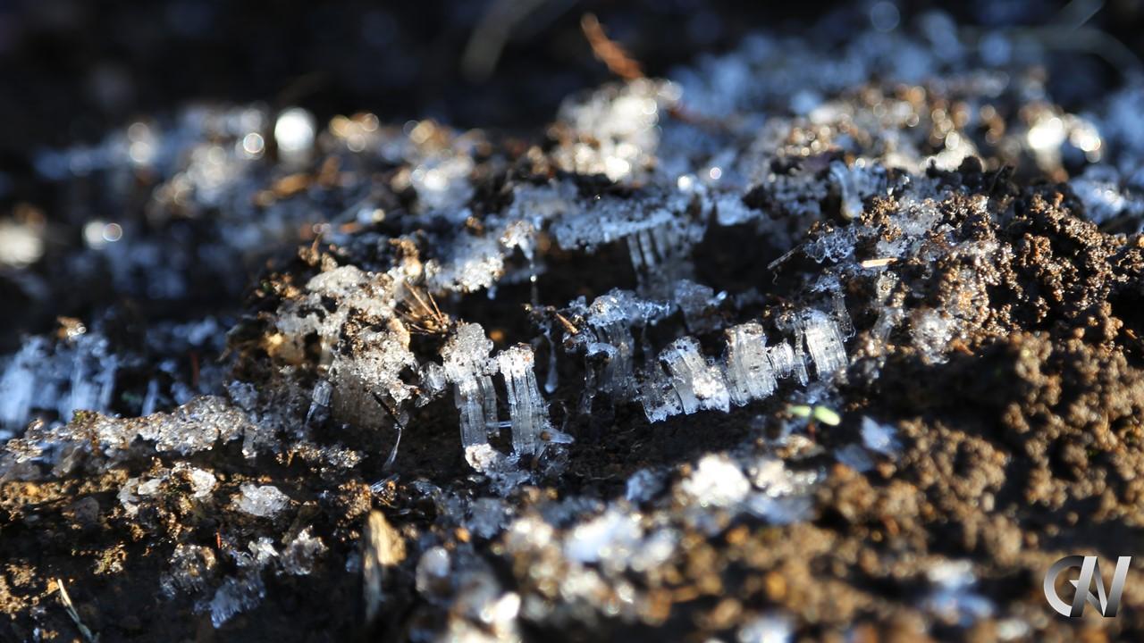 霜柱が地面を持ち上げている様子
