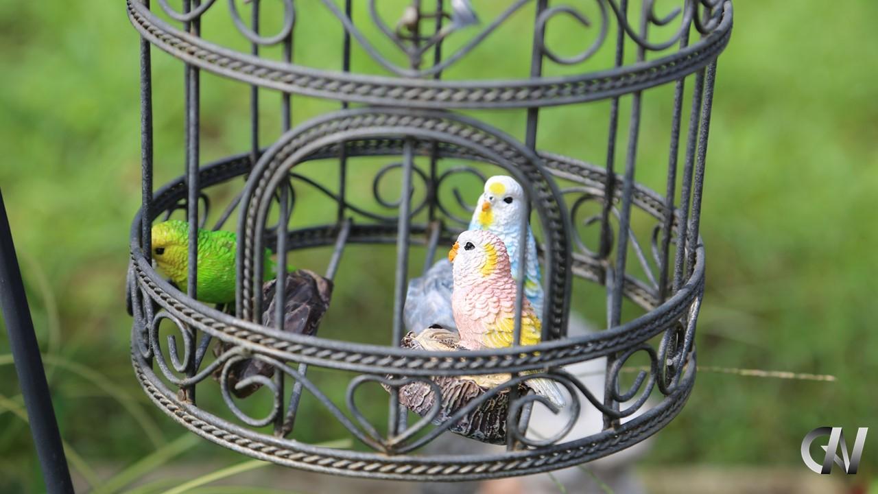 鳥かごのセキュリティ