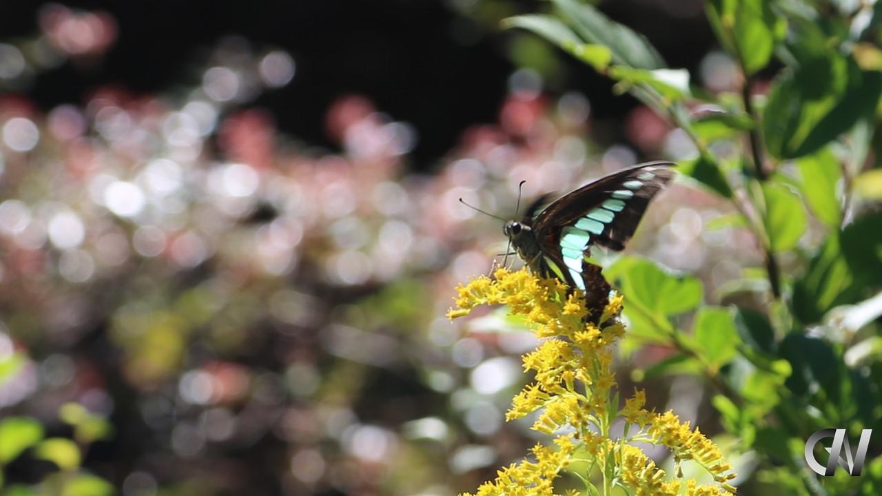 蝶々が朝食をとる様子