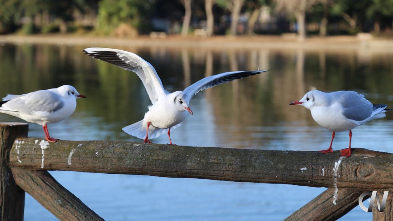 鳥が周りを監視している様子