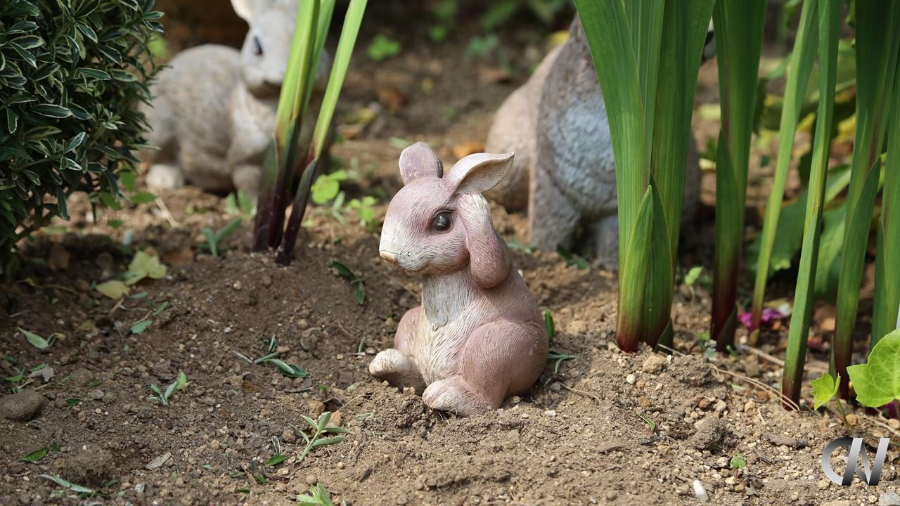 困っているウサギ