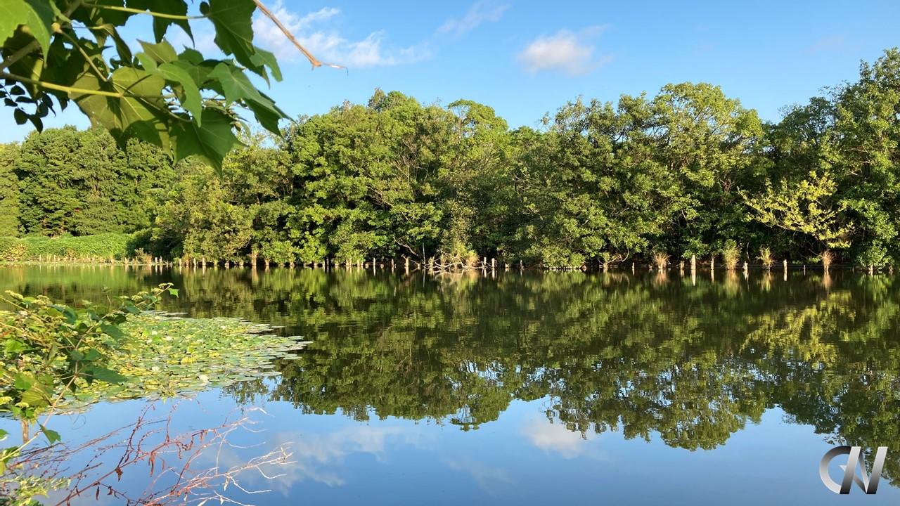 青空がうつる水辺の森