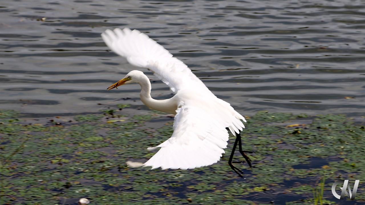 羽を拡げて飛び立つ鳥